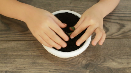 planting plants in flowerpot