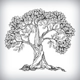 Fototapety Hand drawn tree symbol