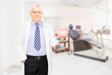 Male dentist holding a dentures at his workplace