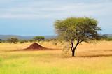 Acacia Tree National Park