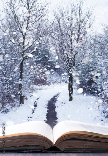 Winter Woodland Book