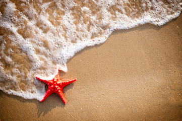 Sandy background with starfish