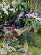 Decorated orchid garden with waterfall