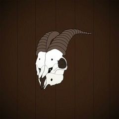 Goat skull on the wall