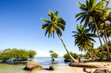 Tropical beach with palms and mangroves