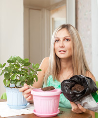 woman transplants Kalanchoe plant