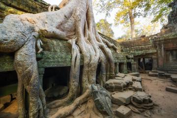 Temple Ta Prohm, Cambodge, Siem Reap
