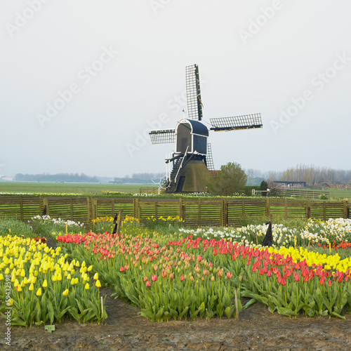 windmill with tulips near Offem, Netherlands