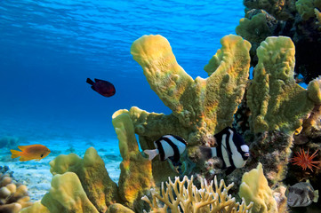 Coral landscape