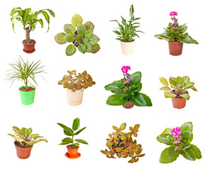 Set indoor plants on white background