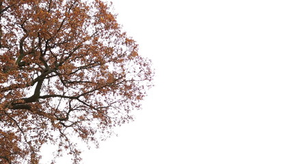 Brown leaves and branches swaying in a gentle autumn breeze