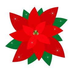 Red Christmas Poinsettia Flower on White Background