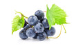 Ripe grapes with leaves, on white background