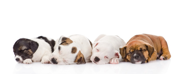 group of puppies sleeping. isolated on white background