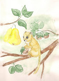 dormouse. watercolor
