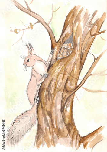 Squirrel on a tree. watercolor