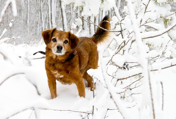 Dog in the snowy woods