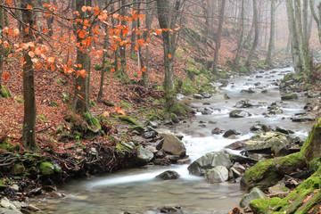 ruscello nella riserva naturale di acquerino