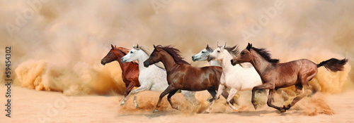 Foto op Plexiglas Zandwoestijn Herd gallops in the sand storm