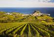 Leinwandbild Motiv Vineyards in Getaria, Gipuzkoa