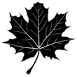 vector maple leaf silhouette