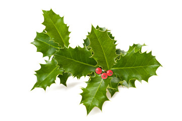holly branch