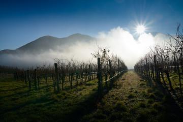 Weingärten im Herbstnebel