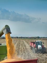 corn harvest on farmland