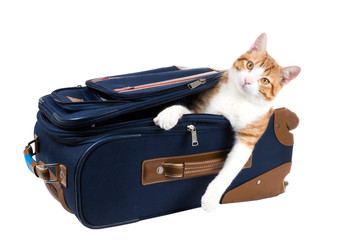 Perky cat sitting in a suitcase