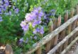 clôture en bois fleurie