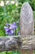 petite fleur mauve près d'un poteau de clôture