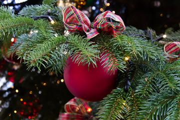 Palla di Natale appesa su di un ramo di abete