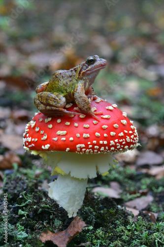 Foto op Canvas Kikker Common frog, Rana temporaria