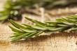 Fresh Organic Green Rosemary