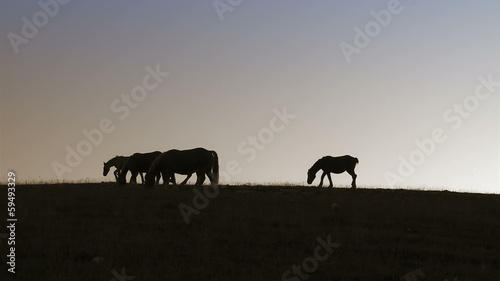 Group of horses at dusk