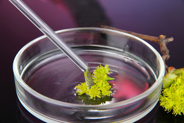 Chemical research in Petri dish on dark purple background