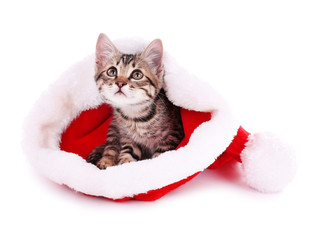 Little kitten in Christmas hat isolated on white