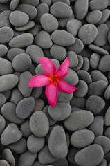 Single of Red frangipani on pebbles