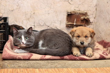 Homeless cat and dog on the rag