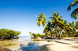 Tropical beach with mangroves and palms