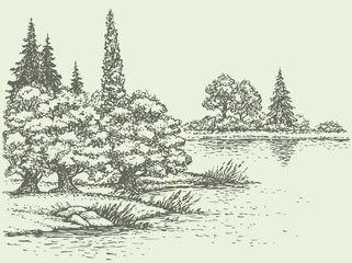 Vector summer landscape. Forest trees on the river bank