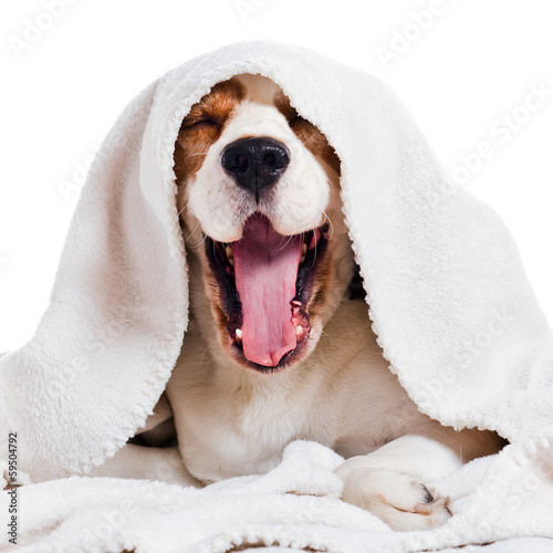 yawning dog