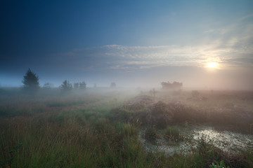 sunrise in denfe fog over swamp
