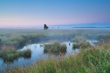 pink sunrise over swamps in summer