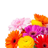 Blumen vor weißem Hintergrund
