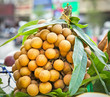 Longan fruit on the market in  Vietnam.