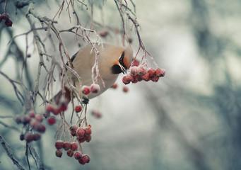 small bird in the cold winter