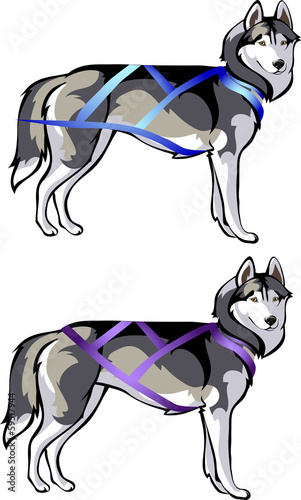 and cargo sled rides - harness for sled dogs