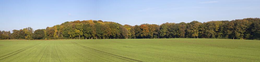 Panoramafoto eines Waldrands bei Kiel, Schleswig-Holstein,Deutsc