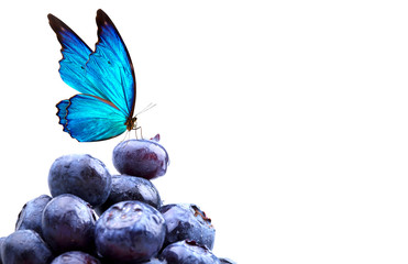 blueberries with water drops and butterfly
